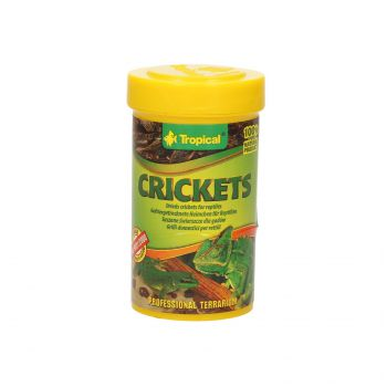 TROPICAL CRICKETS 100ML   11193